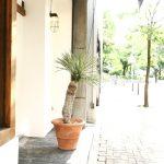 Yucca rostrata / ユッカロストラータのイメージ