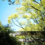 熱田神宮 ///【LEICA M10-P + NOCTILUX-M F0.95/50mm ASPH.】のイメージ